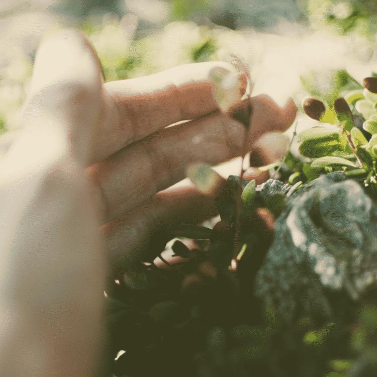 Die Natur beruehren und mich selbst darin erkennen